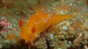 Nudibranch 6