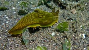 Nudibranch 7