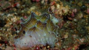 Nudibranch 8